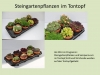 Steingartenpflanzen-im-Tontopfneu