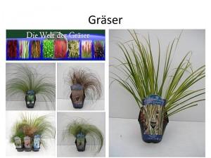 Gräserblog